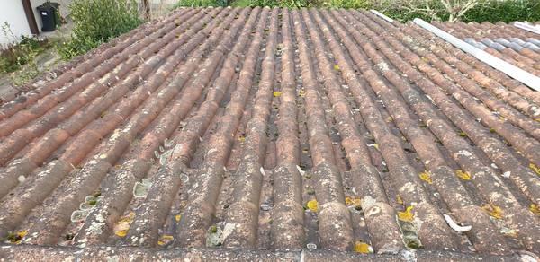 démoussage écologique toiture